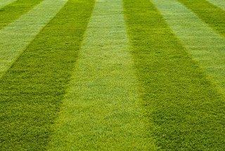 Естествени треви